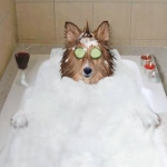 bubblebath-dogs